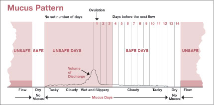 Timing of Sexual Intercourse in Relation to Ovulation